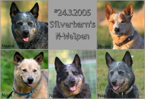 Silverbarn N-Welpen