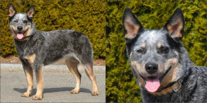 ACD Silverbarn's Raissa Collage