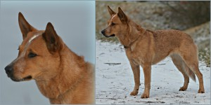 ACD Silverbarn's Ronja Collage