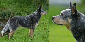 ACD Silverbarn's pippo Collage