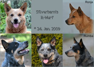 Silverbarn's r-wurf Collage